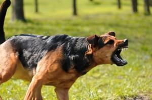 Dog2-300x199